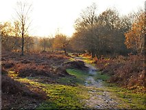 TQ2053 : Path on Headley Heath, late November by Stefan Czapski