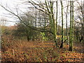 TA1229 : Wasteland to the rear of Bilsdale Grove, Hull by Ian S