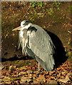 J3675 : Heron, Victoria Park, Belfast by Albert Bridge