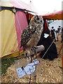 SH7956 : Zazu - a Bengal Eagle Owl by Richard Hoare