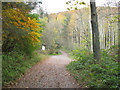 NY2724 : Footpath through the woods by Graham Robson