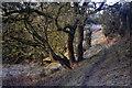 SE3050 : Footpath from Swarth Hill by John Sparshatt