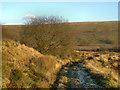 SD7616 : Track on Holcombe Moor by David Dixon