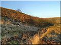 SD7617 : Holcombe Moor by David Dixon