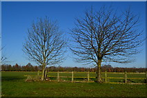 TL8820 : Trees and field behind Feering services by David Martin