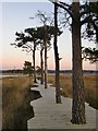 SU9041 : The new boardwalk, Thursley National Nature Reserve (3) by Stefan Czapski