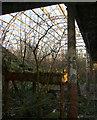 NS6068 : Springburn Park by Thomas Nugent
