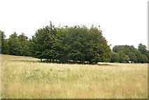 TM2239 : Clump of trees, Brokes Hall by N Chadwick