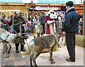 SJ9494 : Santa and his reindeer by Gerald England