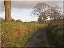 SX4975 : Lane to Nutley Farm by Derek Harper