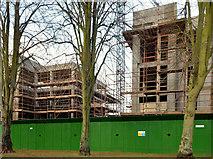 J3271 : Nos 36-38 Windsor Park, Belfast (2012-3) by Albert Bridge