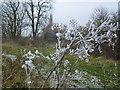 TL4389 : Hoar frost on the fen by Richard Humphrey