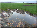 SP3560 : Muddy Field at Square Close by Nigel Mykura