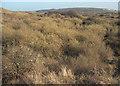 SS8577 : Vegetation at Burrows Well, Merthyr Mawr Warren by eswales