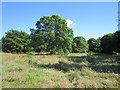NZ2288 : Parkland, Longhirst Hall by Richard Webb