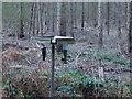 TF0820 : Bird feeders in the Woods by Bob Harvey