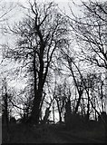 TQ1372 : Trees by the River Crane, December by Stefan Czapski