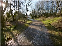 NS4175 : Path in Overtoun Estate by Lairich Rig
