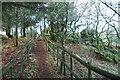 SX7481 : Path to Manaton Rocks by Guy Wareham
