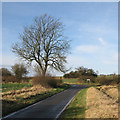 TL5645 : A bend in Bartlow Road by John Sutton