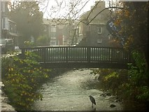 NY3704 : Heron fishing in central Ambleside by Graham Robson