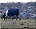 SK6405 : Horse near Covert Lane by Mat Fascione