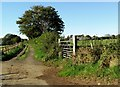 ST7995 : Farm access road near Kingscote by nick macneill