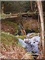 SE8395 : Yaul Sike in Cropton Forest by Matthew Hatton