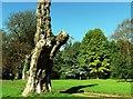 ST7893 : Newark Park by nick macneill
