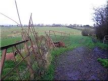 H5371 : Metal gates, Bracky by Kenneth  Allen