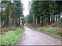 SS6710 : Bridle way, Flashdown Wood by Alex McGregor