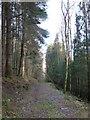NN7421 : Track in East Dundurn Wood by Alan O'Dowd