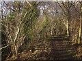 NZ8407 : Esk Valley Walk in Hecks Wood by Derek Harper