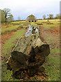 SJ7487 : Felled tree by Stephen Craven