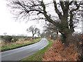 TG4900 : View along Browston Lane by Evelyn Simak