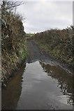 SS9823 : Mid Devon : Muddy Farm Track by Lewis Clarke