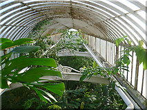 TQ1876 : Inside the Palm House at Kew Gardens by Marathon