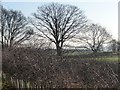 SE3626 : Winter trees along a field boundary by Christine Johnstone