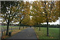 TQ4281 : Avenue of Autumn colours by N Chadwick