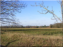 TL1116 : The Common, Kinsbourne Green by Adrian Cable
