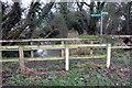 SP9828 : Bridleway crosses Clipstone Brook by Philip Jeffrey