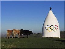 SJ9377 : Heifers admire White Nancy Monument, Bollington by Colin Park