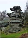 SE2065 : 'Dancing Bear', Brimham Rocks by John H Darch