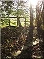 NZ8306 : Esk Valley Walk above Fotherleys Farm by Derek Harper