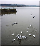 SD4578 : Gulls at Arnside Pier by Karl and Ali