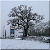 SP3177 : The oak by the garage by E Gammie