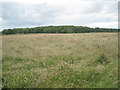 ST6695 : Field southeast of Cat Grove by Robin Stott