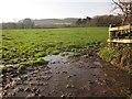 SX8077 : Wet field by Colehays Plantation by Derek Harper
