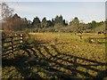 SX7978 : Orchard, Lower Down by Derek Harper