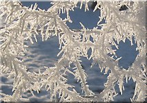 TL8063 : Hoar frost by Bob Jones